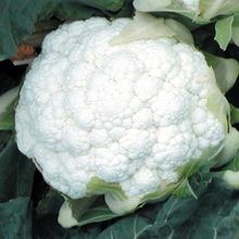Seme karfiola