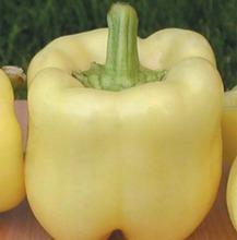 Seme paprike