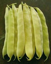 Seme boranije