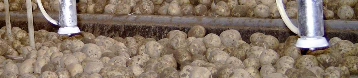MAFEX - Krompir/Voće
