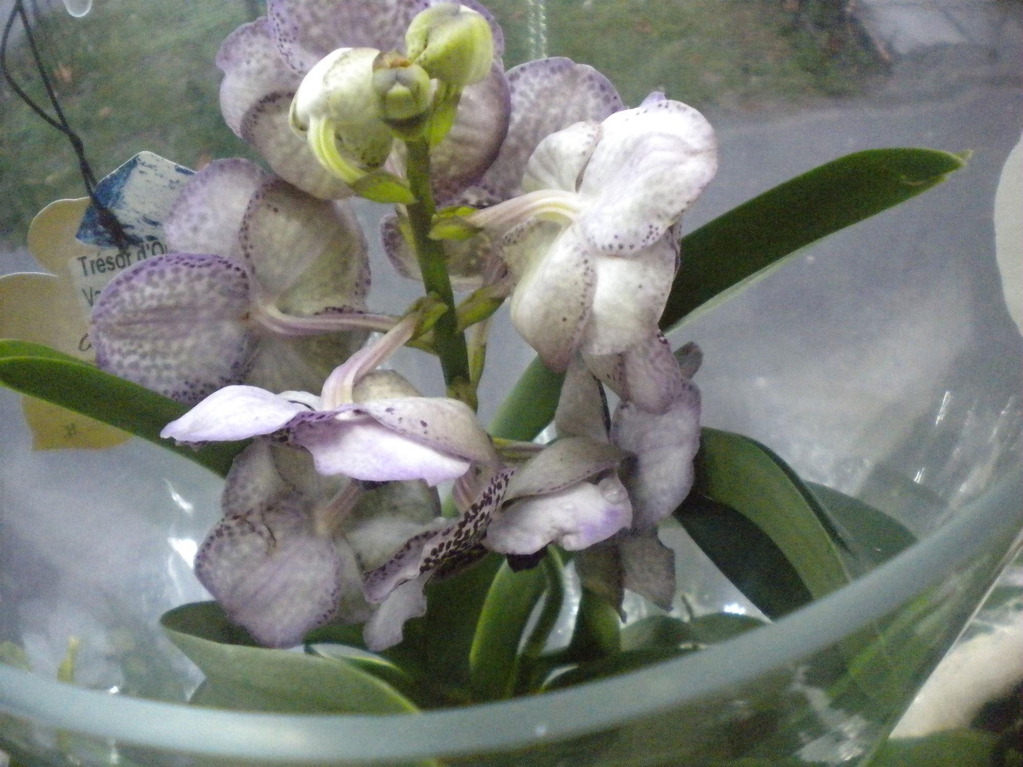 orhideja Green art Novi Sad